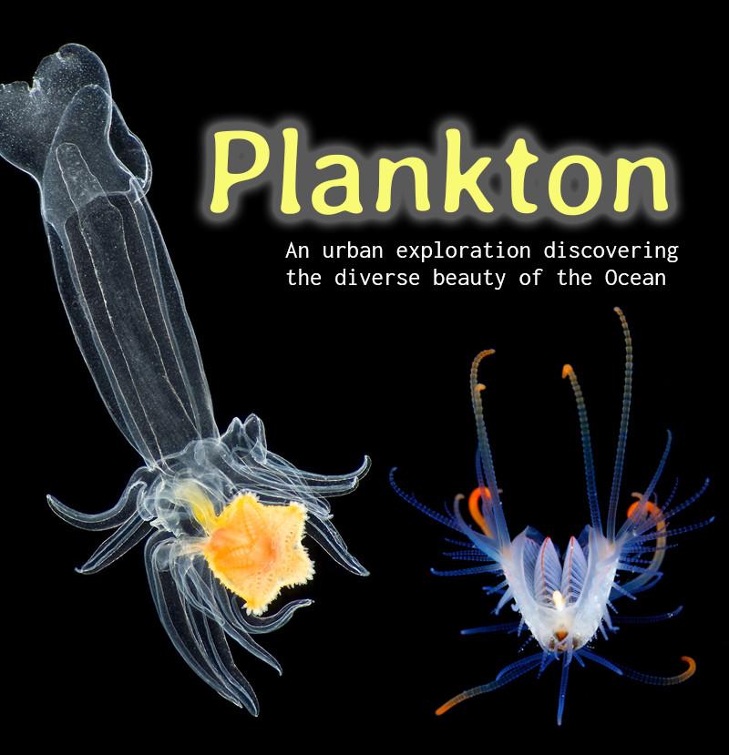 Plankton mini graphic